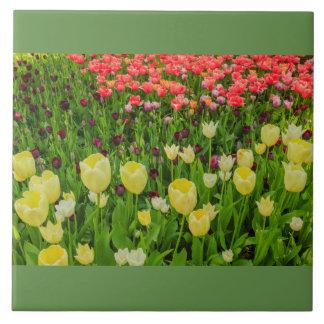 florescência das tulipas em um parque no azulejo