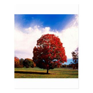 Floresta Clermont Kentucky da árvore de bordo Cartão Postal
