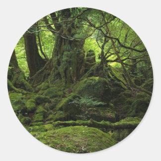 Floresta da selva do musgo adesivo