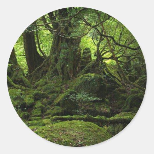 Floresta da selva do musgo adesivo redondo
