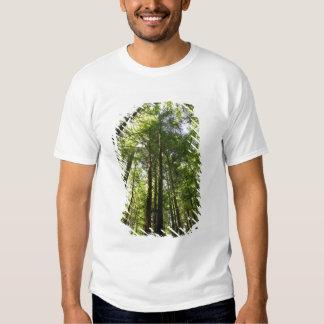 Floresta da sequóia vermelha, Rotorua, Nova Camisetas