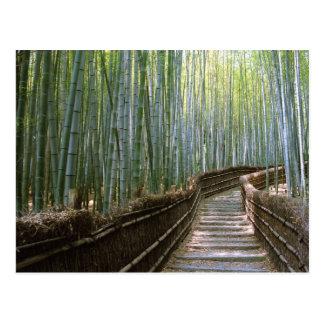 Floresta de bambu em Kyoto Cartão Postal