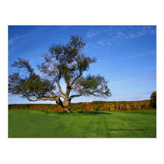 Floresta do estado de Topsmead, cartão de