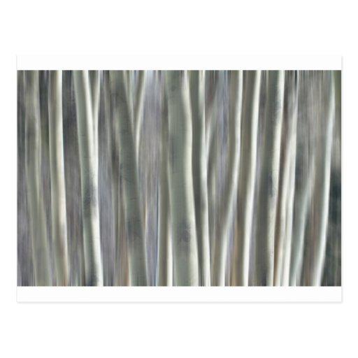 Floresta dos sonhos cartao postal
