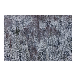 Floresta nevado, parque nacional de Monte Rainier Poster