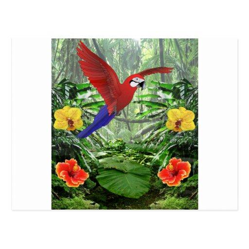 Floresta tropical tropical cartão postal
