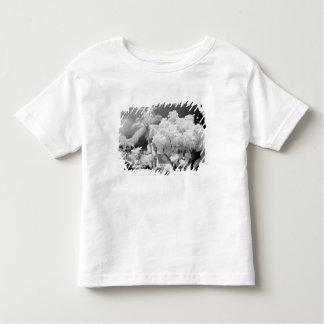Florida fecha a casa e as suas palmeiras, EUA. 2 T-shirts