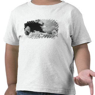Florida fecha a casa e as suas palmeiras, EUA T-shirt