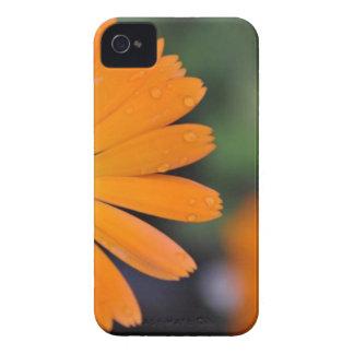 Flower power capas para iPhone 4 Case-Mate