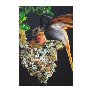 Flycatcher africano do paraíso impressão em tela