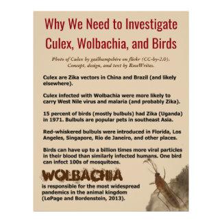 Flyer Mosquito, Wolbachia, e pássaros por RoseWrites