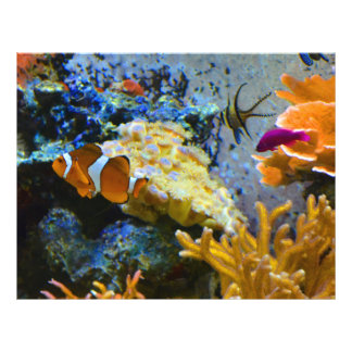 Flyer oceano do coral dos peixes do recife
