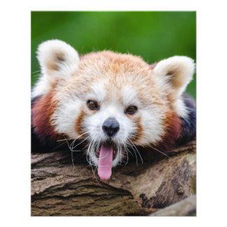 Flyer Panda vermelha