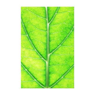 Folha da árvore impressão de canvas envolvidas
