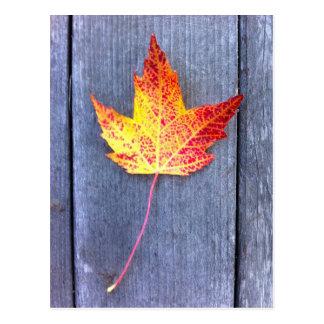 Folha de bordo do outono cartão postal