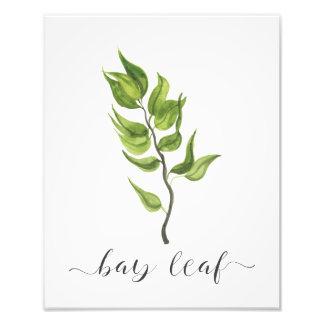 Folha de louro botânica do impressão da erva da foto