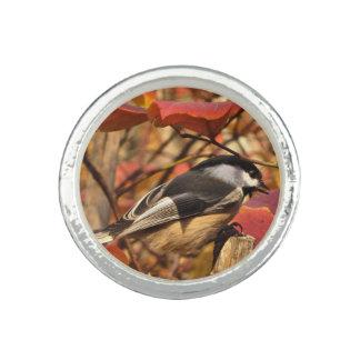 Folha do outono da natureza com pássaro do anéis com imagem