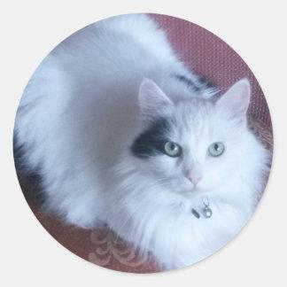 Folha macia do gato de 20 etiquetas adoráveis