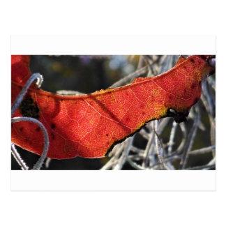 Folha vermelha com musgo espanhol cartão postal