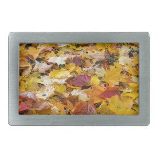 Folhas caídas da cor da queda nos parques mmoídos