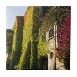 Folhas coloridas em paredes da casa