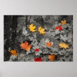 Folhas coloridas em um poster preto e branco do mu