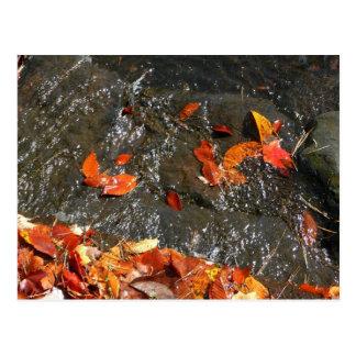 Folhas da queda no cartão da cachoeira cartao postal