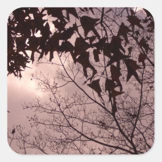 Folhas das árvores em um céu surpreendente adesivo quadrado