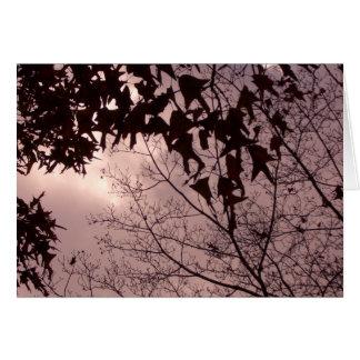 Folhas das árvores em um céu surpreendente