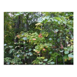 Folhas de bordo adiantadas do outono cartão postal