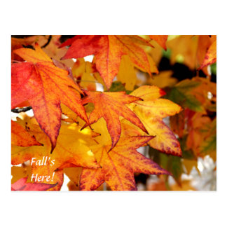 Folhas de bordo amarelas & alaranjadas cartão postal