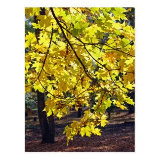 Folhas de bordo amarelas cartão postal