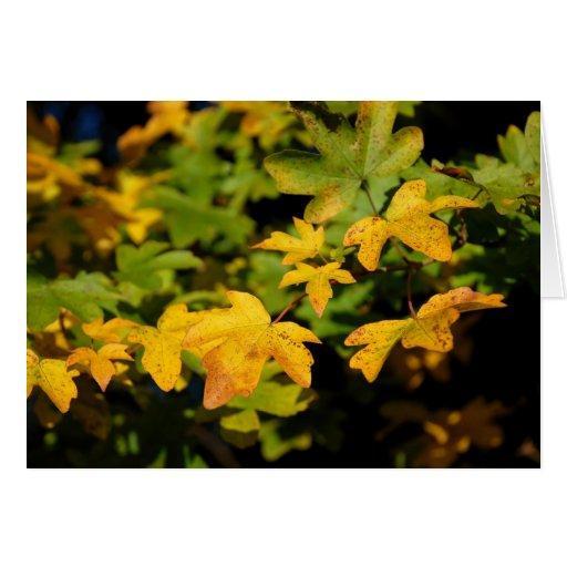 Folhas de bordo cartoes