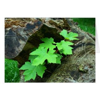 Folhas de bordo cartão comemorativo