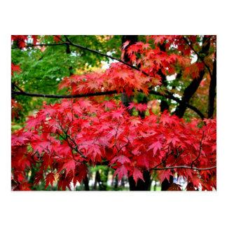 Folhas de bordo cartoes postais