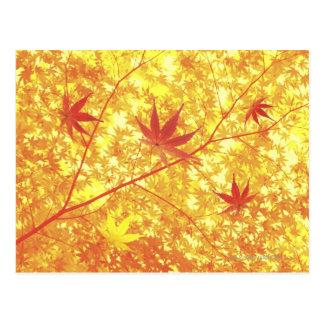 Folhas de bordo, fim-acima cartoes postais