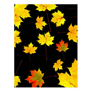 folhas de bordo na água cartao postal