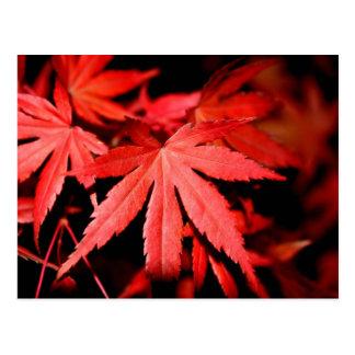 Folhas de bordo - vermelho cartão postal