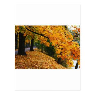 Folhas de outono cartão postal