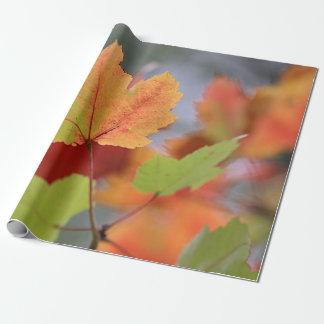 Folhas de outono papel de presente