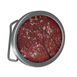 Folhas de outono vermelhos marrom do Outono da