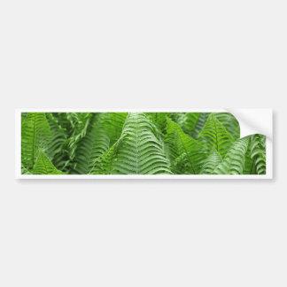 Folhas de samambaias do Polystichum Adesivo Para Carro