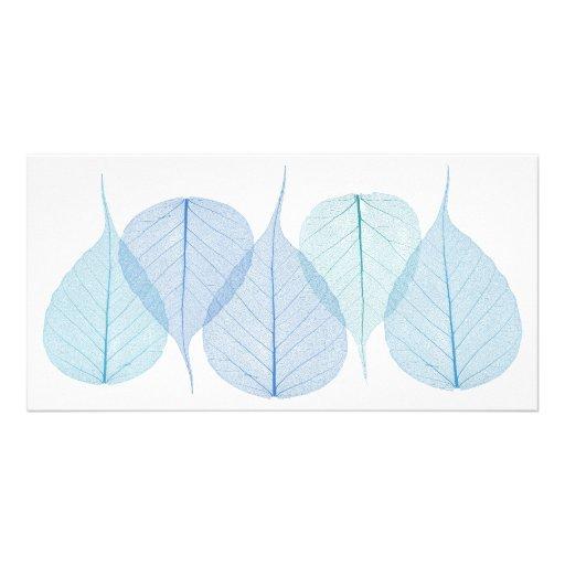 folhas do esqueleto no cartão branco cartao com fotos