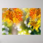 Folhas nos ramos na floresta do outono pôsteres
