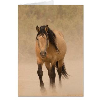 Fora do cartão do cavalo selvagem da poeira