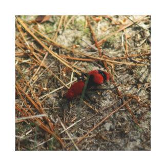 Formiga vermelha de veludo, cópia das canvas