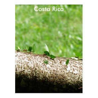 Formigas do cortador da folha em Costa Rica Cartão Postal