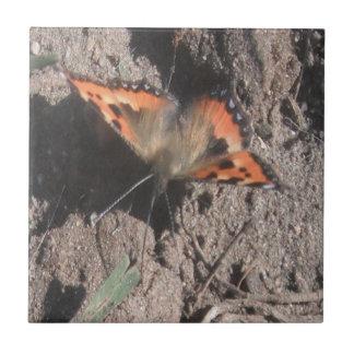 Forragem peludo da sujeira da borboleta do azulejo