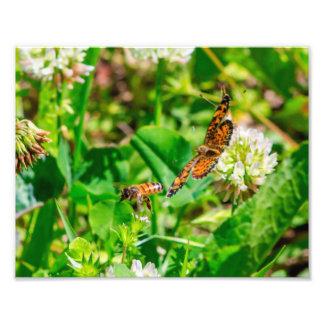 Foto Abelha e borboleta