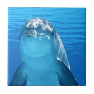Foto amigável do golfinho